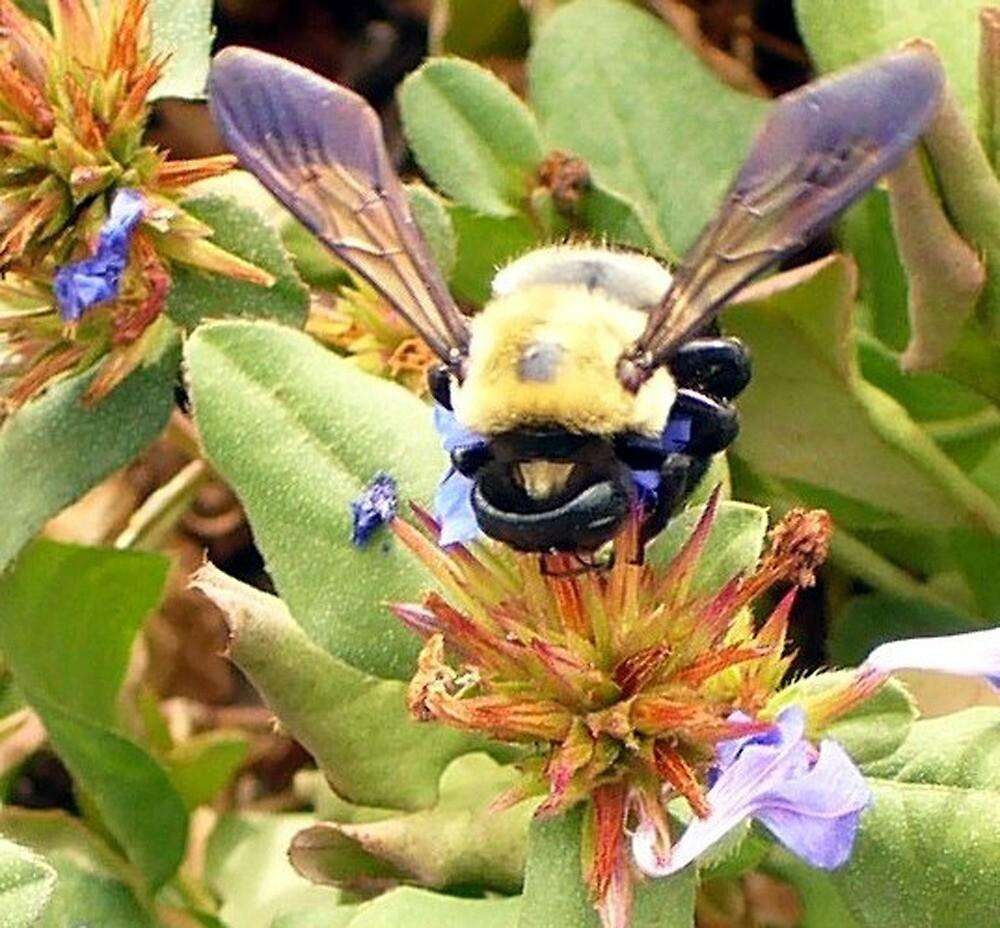 Fuzzy Bee by Darlene Bayne