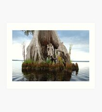 Remarkable Cypress - Lake Drummond Art Print