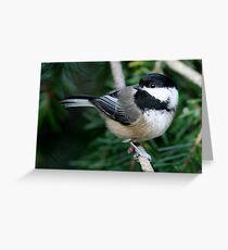 Chickadee: Among Feathery Evergreen Boughs Greeting Card