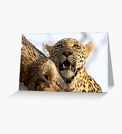 Induna - Young Male Leopard Greeting Card