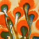 Poppies  by Annie Conboy