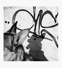Shadow of a Dog | Black & White Street Photography Photographic Print
