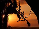 """""""Banksia Silhouette"""" by debsphotos"""