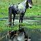 Horse 'n Water