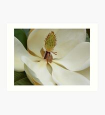 Magnolia Up Close Art Print