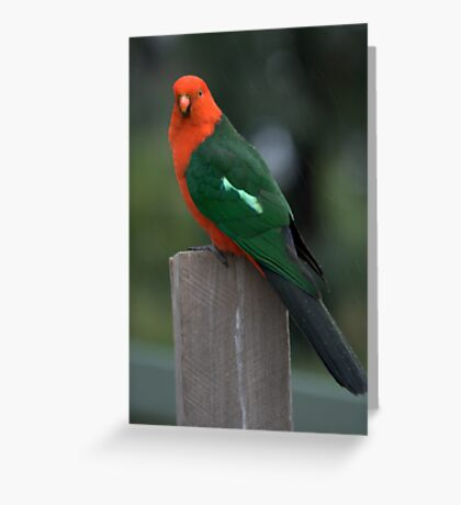 Is there any food for me? Greeting Card