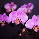 Pretty in Purple 2 by shalayne