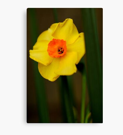 Mellow Yellow Canvas Print