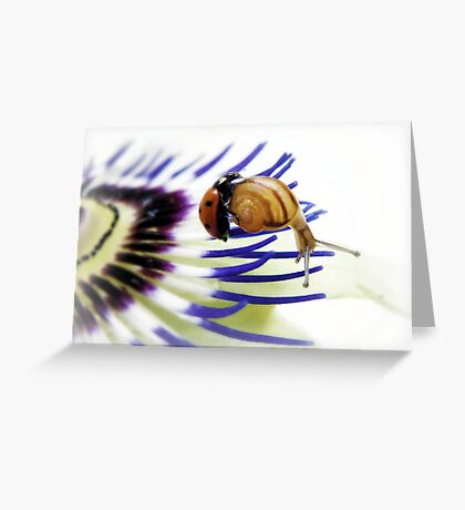 Passion impossible  Greeting Card
