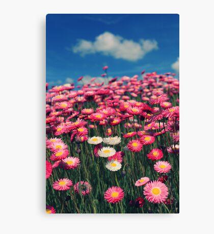 Field of dreams... Canvas Print