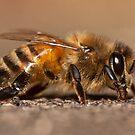 Bee by Daniel Spruce