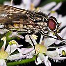 Pollination 2 by Gareth Jones