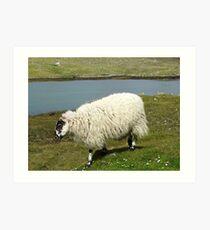 Schafe auf der Insel Harris Kunstdruck