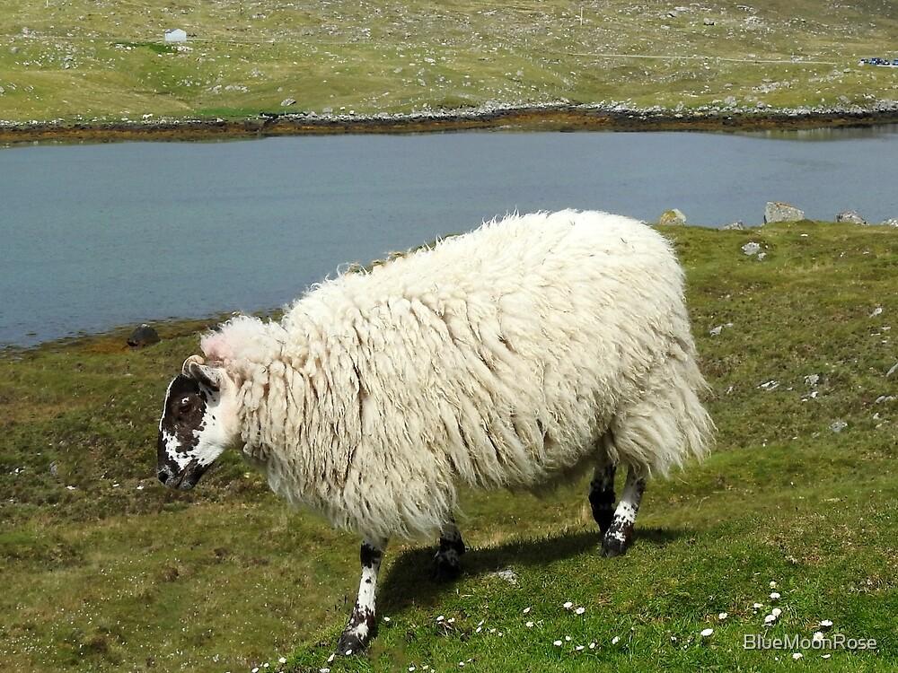 Schafe auf der Insel Harris von BlueMoonRose