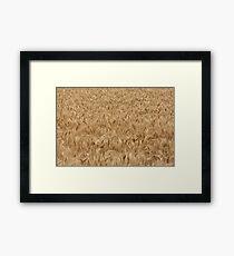 Cereal Framed Print