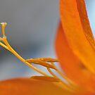 Orange............ by Debbie-Stanger