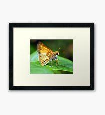 A Moth I Think Framed Print