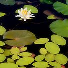 White Lilly by JHRphotoART