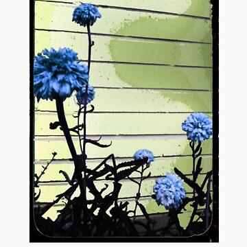 blue carnations by schadenfreude