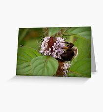Necter Collector Greeting Card
