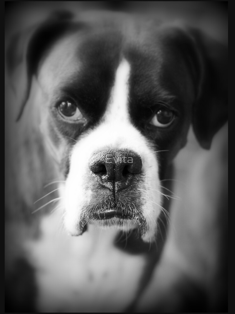 Arwen's Portrait - Female Boxer - Boxer Dogs Series by Evita