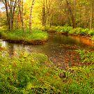Autumn Stream by Alana Ranney