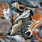 Box of Shells by Karin Zeller