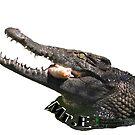 Mr. E the Nile Crocodile by PhoenixHerp