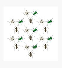 Tiger Beetle Pattern Photographic Print
