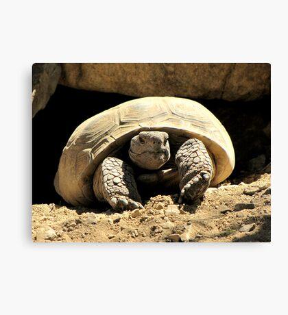 Desert Tortoise Canvas Print