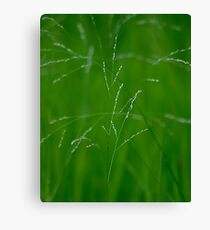 Green & White  Canvas Print