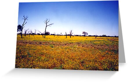 Outback Wildflowers by Michael John