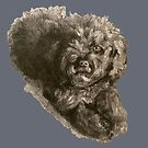 Fluffy Poodle Puppy Grey and Black by Monica Batiste