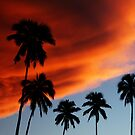 Palm Dawn by Adam Jones