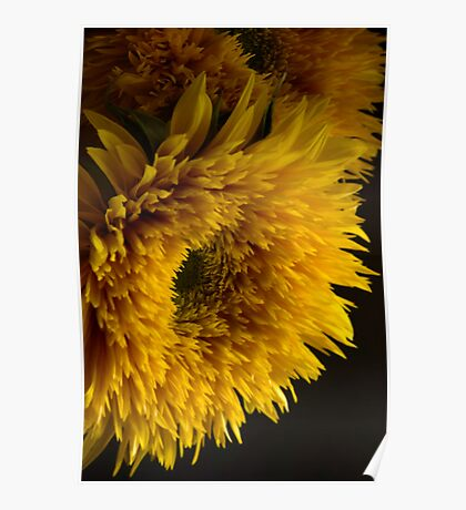 Double Shine Sunflowers - Up Close and Glowing Poster