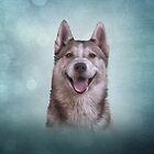 Zeichnender heiserer Hund von bonidog