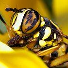 Mellow yellow by Jim Butera