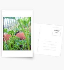 A Baby Swallowtail Caterpillar Postcards