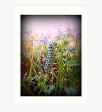 The Swallowtail Caterpillar 2 Art Print