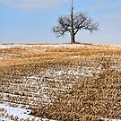 The Great Old Oak Tree by KFuoco