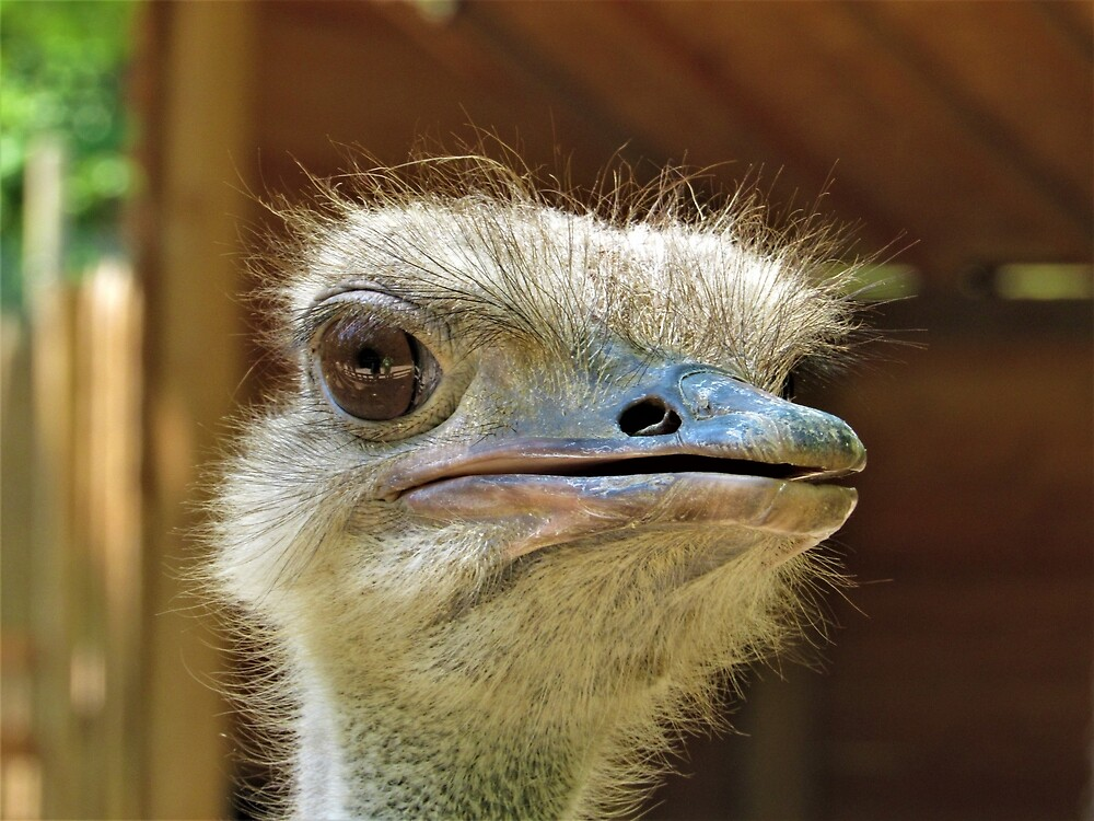 Ostrich Close-Up by tomeoftrovius
