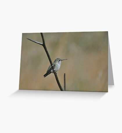 Humming Bird in California  Greeting Card