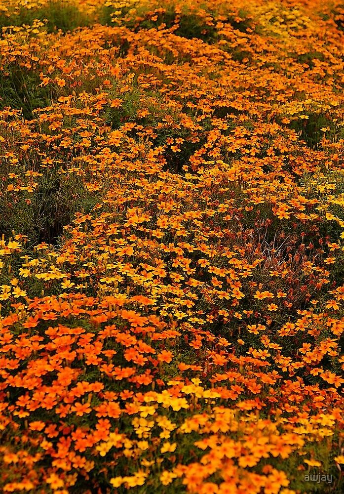 carpet of flowers by awjay