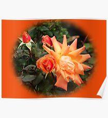 Orange Roses set in Orange Poster