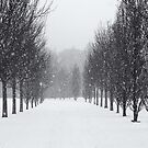 A walk in the snow by Phill Jenkins