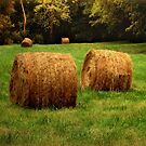 Field and Hay by Roger Sampson