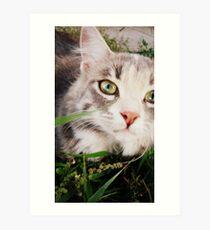 kitteh in the grass Art Print