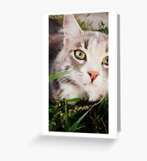 kitteh in the grass Greeting Card