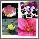 Summer Flowers Collage von BlueMoonRose