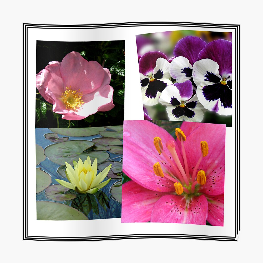 Summer Flowers Collage Poster